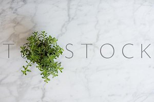 Sedum Plant Marble Photo Flat Lay