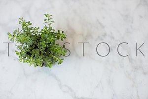 Frilly Plant Lifestyle Photo Flatlay