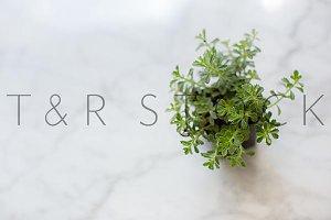 Lacy Plant Succulent Lifestyle Photo
