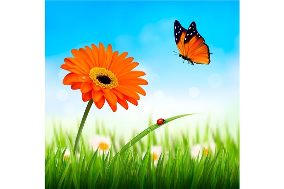 Beautiful Flower And A Butterfly