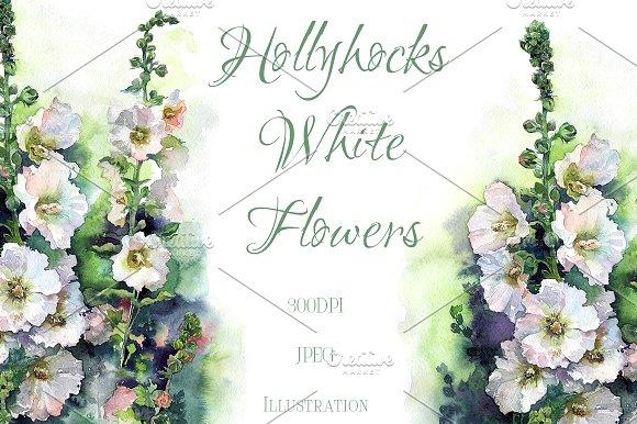 Watercolor Hollyhocks White Flowers