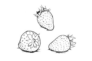 Strawberry Illustration Drawing B&W