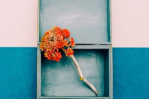 Flower in the box. Minimal design