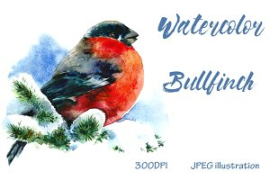 SALE! Watercolor Christmas Bullfinch