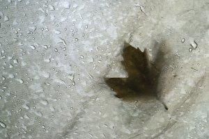 Autumn leaf on tent