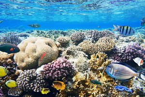 Colorful coral reef fishes