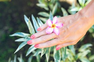 Plumeria frangipani flower in woman hand on a beautiful nature background