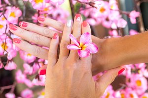 Plumeria frangipani flower in woman hand on a beautiful decorative pink sakura background