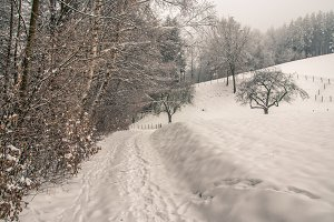 Winter way / Snow