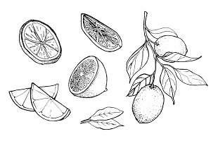 Hand-drawn Lemon Illustration, B&W