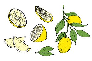 Hand-drawn Lemon Illustration, Color