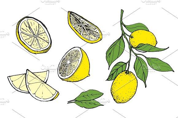 Hand-drawn Lemon Illustration Color