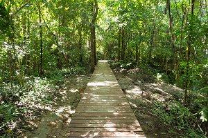 Wooden walkway bridge