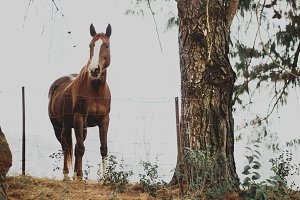 Beautiful horse on a misty morning