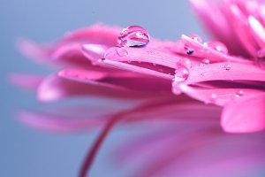 Water drop on flower