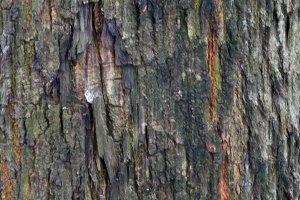 Motif On a Tree Trunk 1
