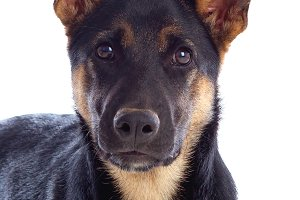 Beautiful adult dog
