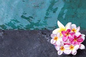 Plumeria flower pink and white frangipani tropical flower, plumeria flower bloominge, spa flower, Bali island.