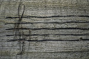 Musical notes conception