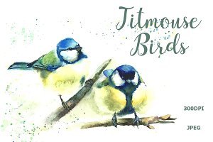 SALE Watercolor Titmouse birds
