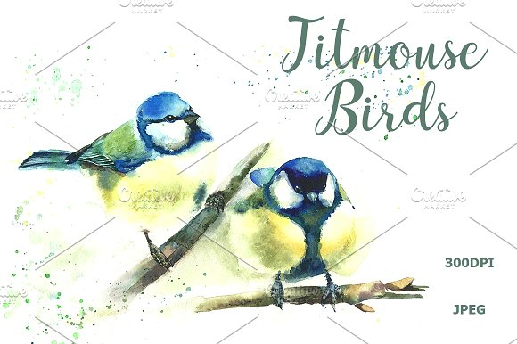 SALE Watercolor Titmouse Birds