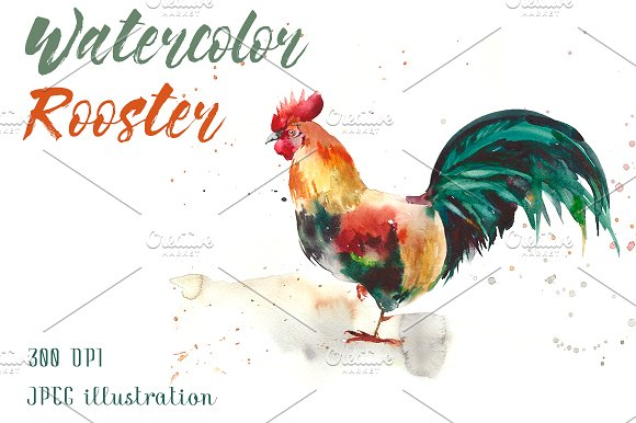 Watercolor Rooster Illustration