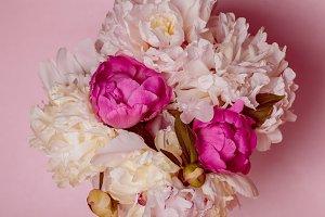 Peonies on pink