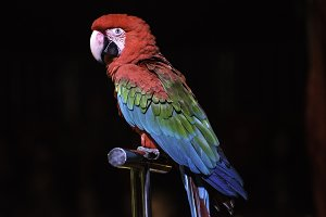 Parrot in the circus