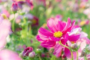 red flower floral nature garden