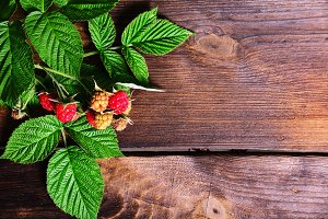 branch of raspberry with red berries