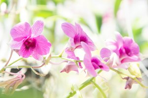 Abstract orchid flowers