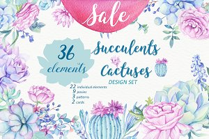 -50% OFF - Succulents & Cactuses