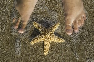 Starfish and feet on the beach