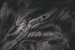 Dark Old Wood Tree Texture