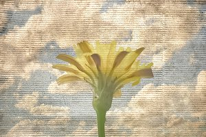 Flower Over Blue Sky Grunge Background