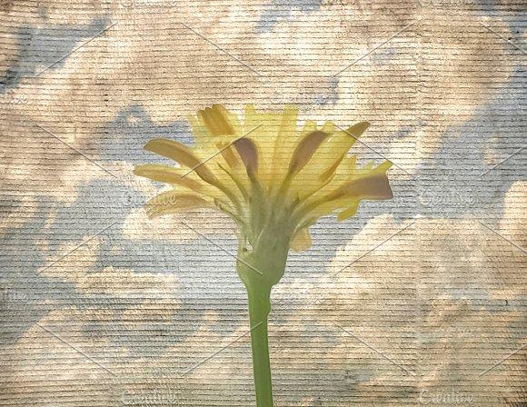 Flower Over Blue Sky Grunge Background