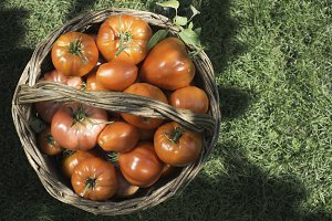 Tomatoes in wooden basket