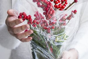 Woman hand holding red winterberry