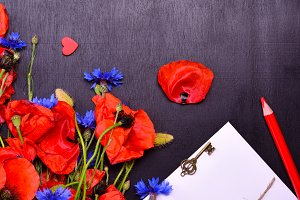 Red poppies and blue cornflowers