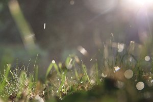 Image of grass right after a morning rain