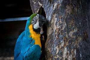 Wild parrot bird on a tree in nature, park of Bali island, Indonesia.