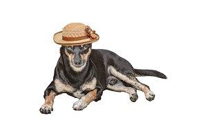 Petit Dog with Women Hat