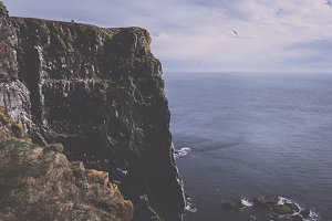 Bird Cliffs in Iceland