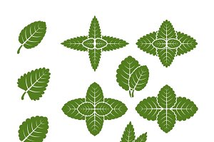 Mint leaves vector set