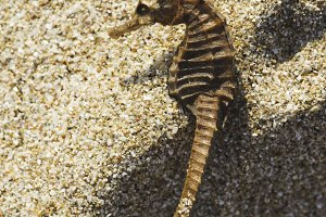 Seahorse on the beach