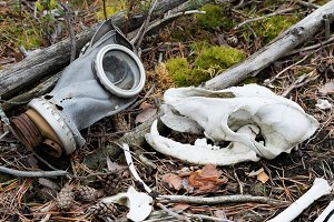 Skull of a wolf and an old gas mask