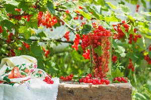 Glass with ripe red currant on the table