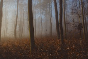 Mysterious foggy Forest in Spring