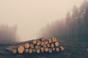 The Pile of Lumber in a foggy Forest