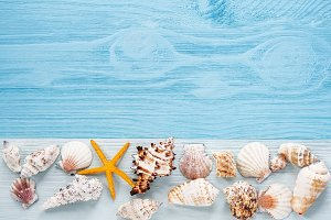 Shells on blue wooden board